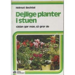 Dejlige planter i stuen